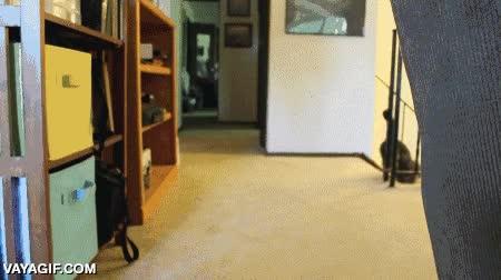 Enlace a El entretenimiento de este gato es impedir que el perro pueda jugar