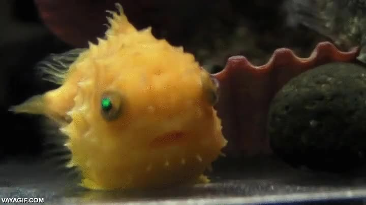 Enlace a Nunca había visto a un pez tan asombrado como este