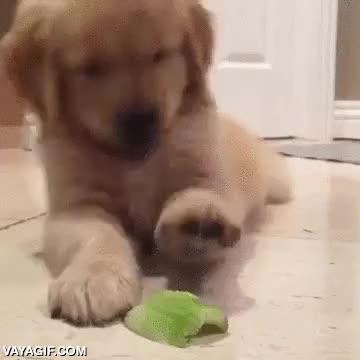 Enlace a La batalla entre este cachorro y su primer trozo de apio