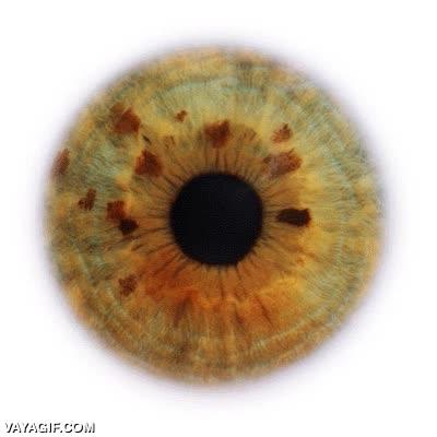 Enlace a Diferentes tipos de ojos con diferentes formas y colores