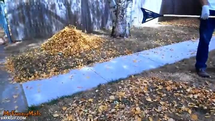 Enlace a Locura perruna desatada con una montaña de hojas secas