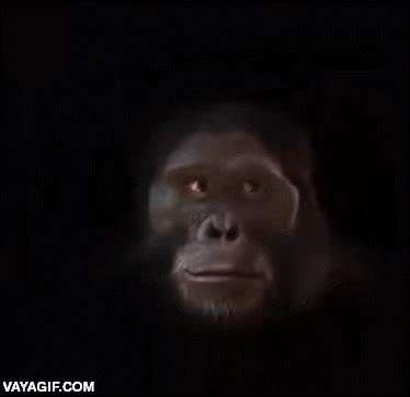 Enlace a Evolución del ser humano desde sus inicios