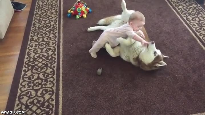 Enlace a Un husky siberiano rojo jugando con este bebé con toda la ternura y cuidado del mundo