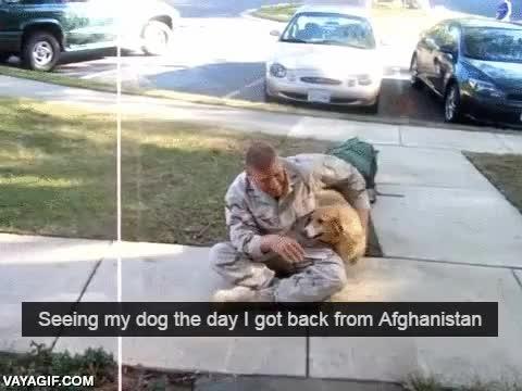 Enlace a La locura desatada de este perro al ver volver a su humano de Afganistán tras su servicio militar