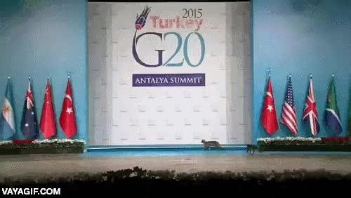 Enlace a Mucha seguridad en el G20 de Turquía pero se le cuelan hasta los gatos