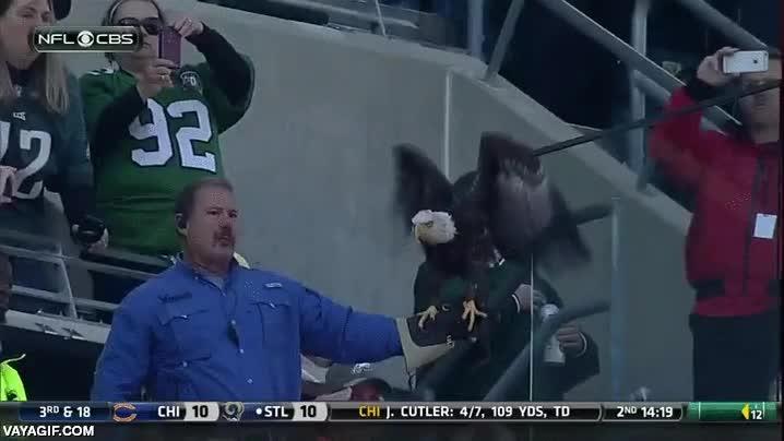 Enlace a Una águila calva con una GoPro en el acto inaugural de un partido de fútbol americano