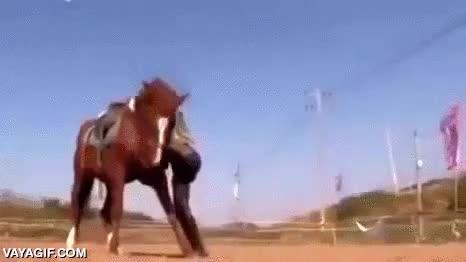 Enlace a Este caballo se hace el muerto cada vez que alguien intenta montarlo