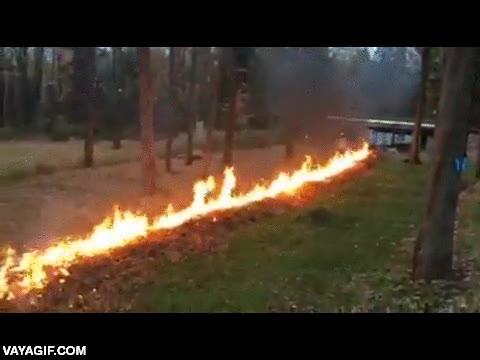 Enlace a Para que nos demos cuenta de la capacidad de propagación de incendios que tienen las hojas secas