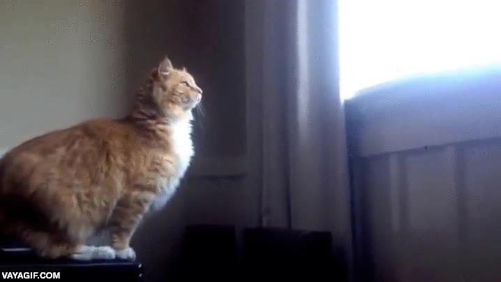 Enlace a El gato que CASI salió disparado a través de la ventana