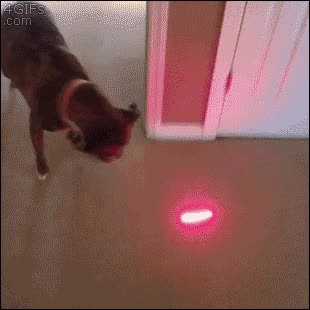 Enlace a Creo que este perro no ha estado tan confundido en su vida