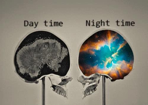 Enlace a Cerebro de día vs. cerebro de noche