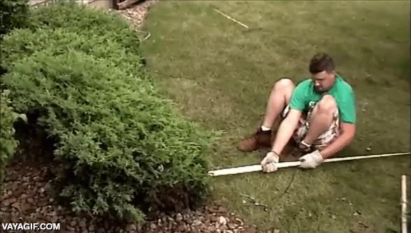 Enlace a Hasta el árbol más pequeño tiene el derecho de defenderse ante un ataque