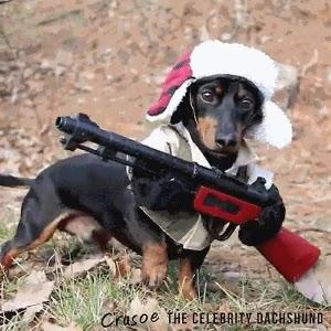 Enlace a Cuando me dijeron que me regalaban un perro cazador me esperaba otra cosa