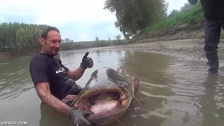 Enlace a Había visto antes peces gato bastante grandes, pero este, ¡guau!