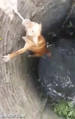 Enlace a Rescatando con una simple cuerda a un perro que cayó a un pozo