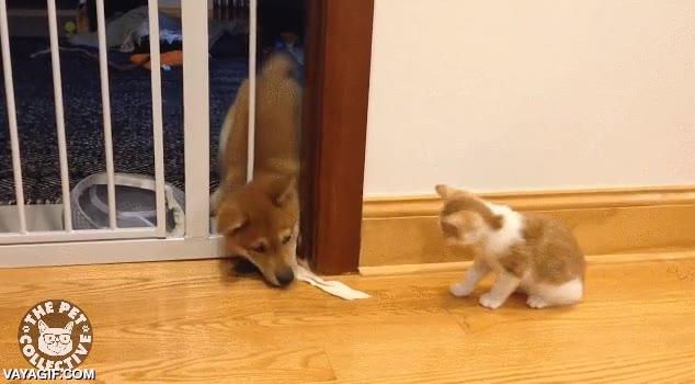 Enlace a La eterna pelea entre perros y gatos, no tan fiera como uno podría pensar