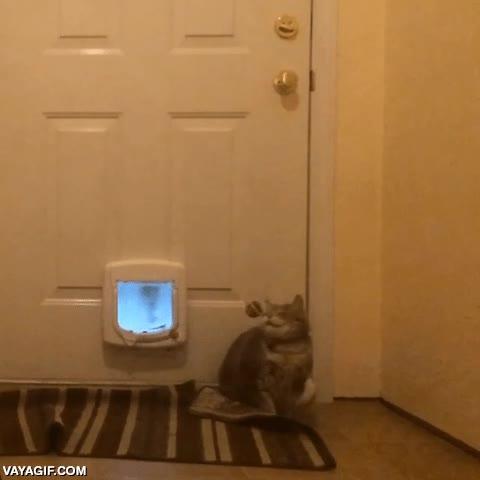 Enlace a Para que digan que los gatos tienen unos grandes reflejos