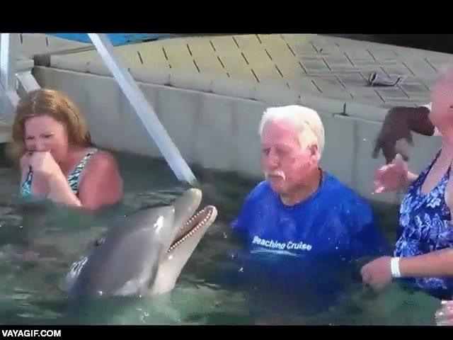 Enlace a Una guerra de escupirse agua en la cara entre un delfín y un señor mayor