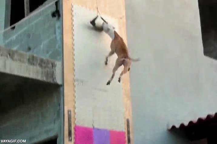 Enlace a El perro que desafiaba a la gravedad por velocidad y potencia