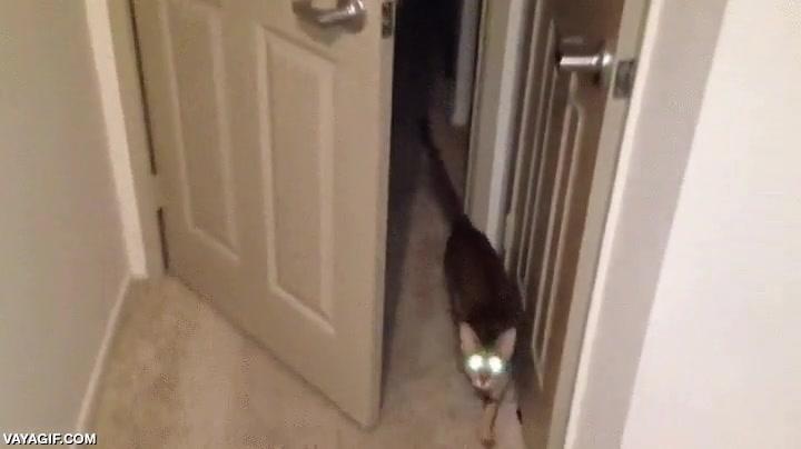 Enlace a ¿Crees que cerrar la puerta te va a salvar de mí?