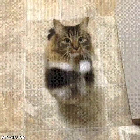 Enlace a Este gato ha desarrollado unos extraños movimientos para cuando quiere chuches