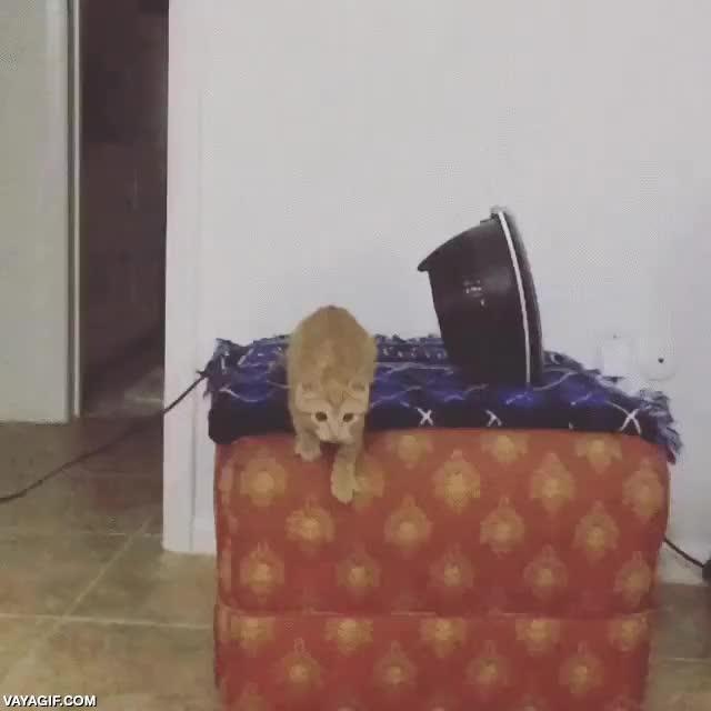 Enlace a El primer salto grande de este gatito
