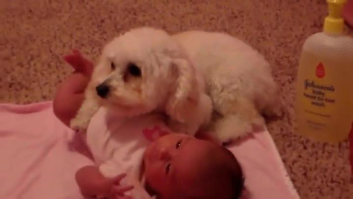 Enlace a El perrito que protegía a su pequeño humano del malvado secador de pelo