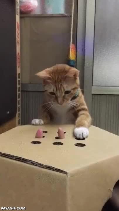 Enlace a Es tan fácil entretener a un gato...