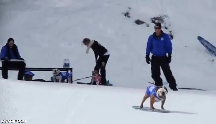 Enlace a El perro skater también es un grande con el snowboard