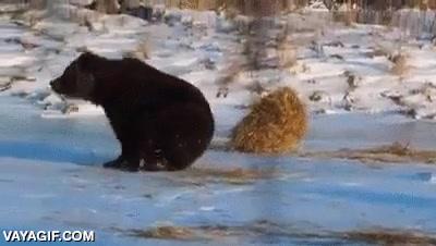 Enlace a Todos los osos son patosos y les encanta jugar
