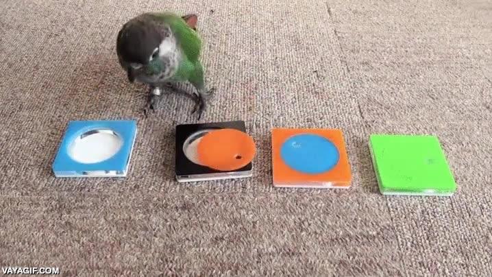 Enlace a Sin duda las aves son los animales más inteligentes