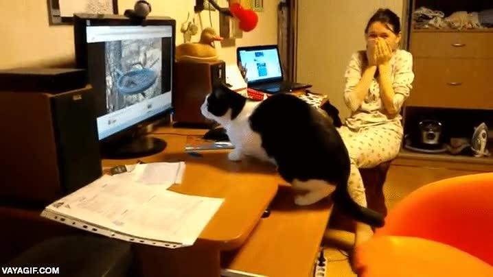 Enlace a El gato que quería cazar pajáros a través de la pantalla del ordenador