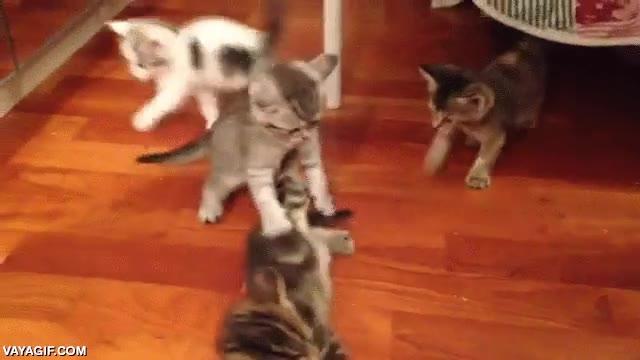 Enlace a En esto se convierte tu casa si tu gata tiene una camada de gatitos