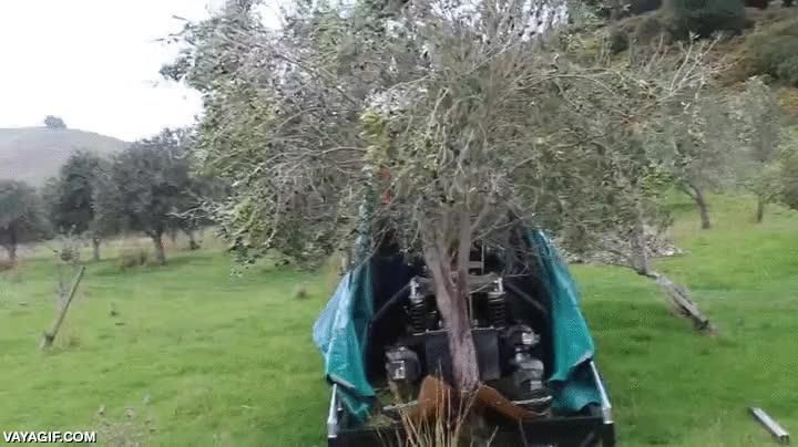 Enlace a Los tiempos de ir a los campos a recoger la oliva ya son cosa del pasado