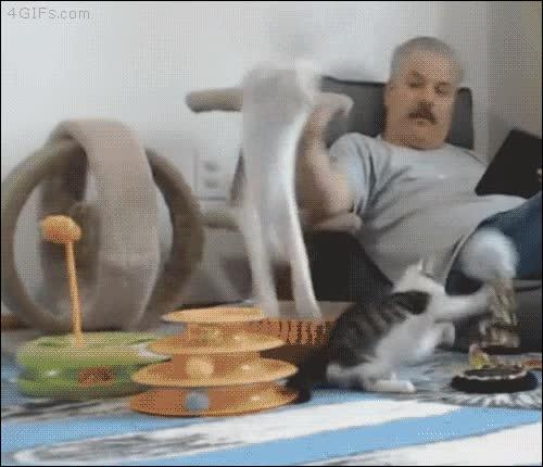 Enlace a Antes de tocar a tu gato, asegúrate que no tiene el sistema de defensa automática activado