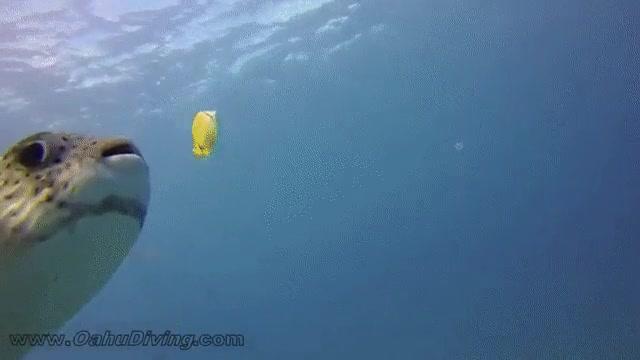 Enlace a Pues va a ser que un pez globo es más agradecido que mi gato