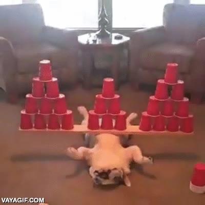 Enlace a Una prueba canina de equilibrio superada con nota