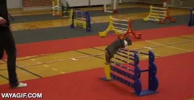 Enlace a Un circuito de agility no es nada para un conejo