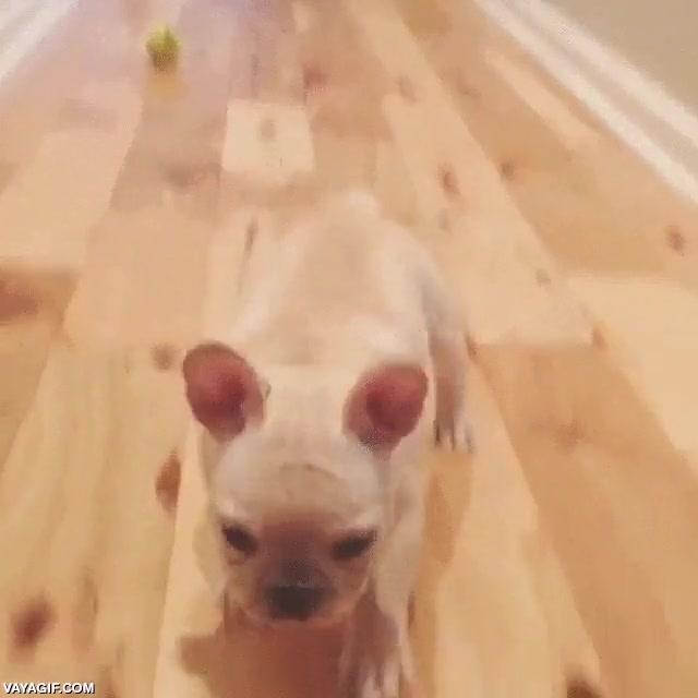 Enlace a Bueno, igual no es el perrito más listo que he visto, pero al menos es adorable