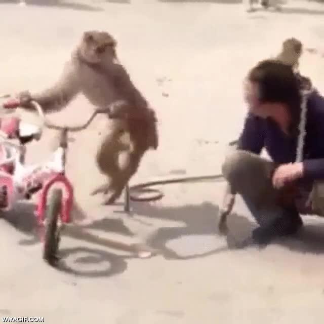 Enlace a Para que luego digan que no descendemos de los monos, si somos igual de cafres...