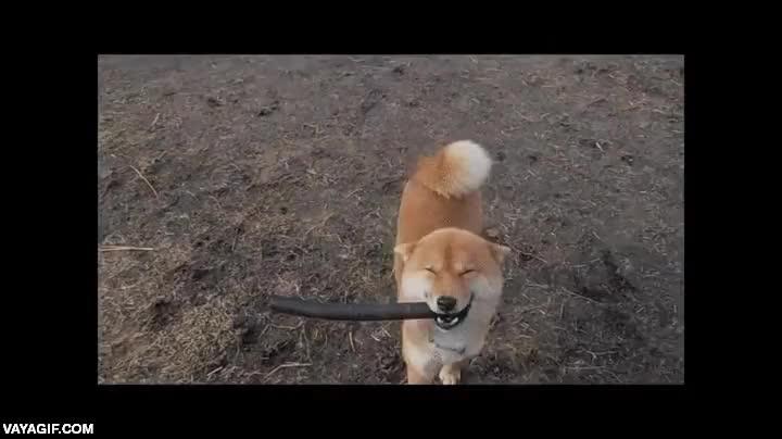 Enlace a No se puede estar más feliz que este perro con su palo