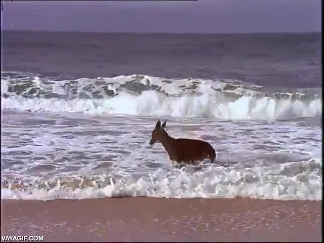 Enlace a Tenemos en exclusiva los primeros segundos del nuevo crossover 'Bambi buscando a Nemo'
