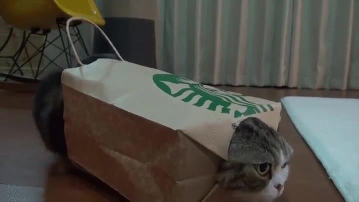 Enlace a Muchos dicen que hay gente que trollea a sus gatos, pero es que a veces se bastan ellos solos