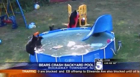 Enlace a ¡Fiesta loca en la piscina!