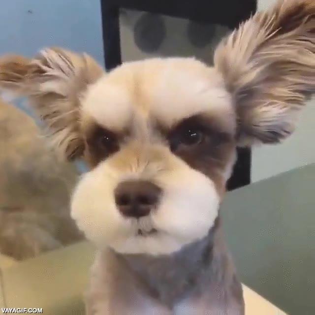Enlace a Sé que lo parece, pero este perro no está enfadado