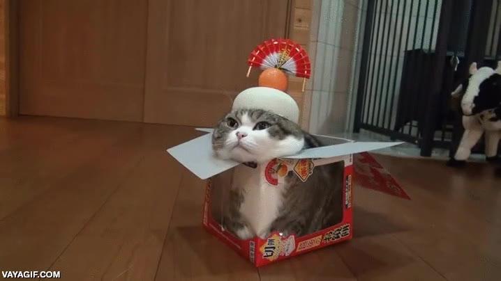 Enlace a Creo que este gato está fingiendo ser una estatua, y lo peor es que parece que cuela