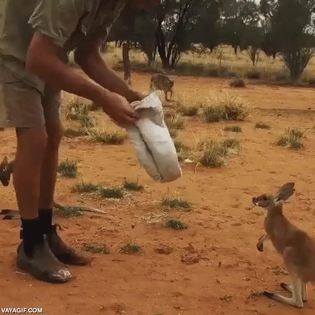 Enlace a Un bebé canguro descansando en una bolsa adoptiva