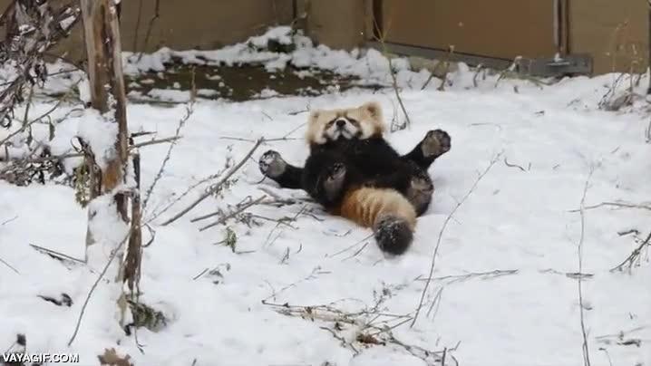 Enlace a Relajándose en la nieve