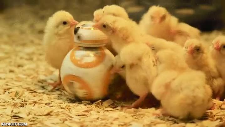 Enlace a Estos pollitos adoran la nueva de Star Wars