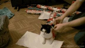 Enlace a Si no sabes qué regalar para Reyes, prueba con un gato, pero envuélvelo bien